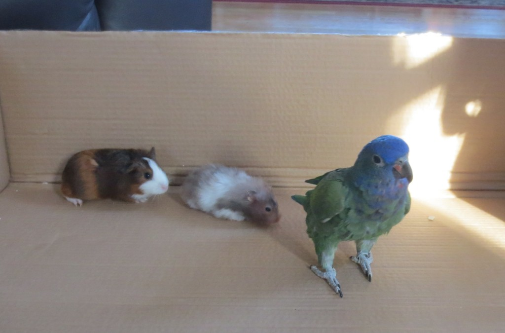 The contenders in the small animal Olympics!