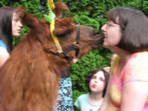 Yes, that's me, 8 months pregnant kissing Rojo the Llama!