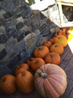 Friday Fun – Pumpkin Harvest